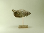 Wood Conch Shell Statue