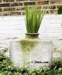 Square Bottle Planter Vase